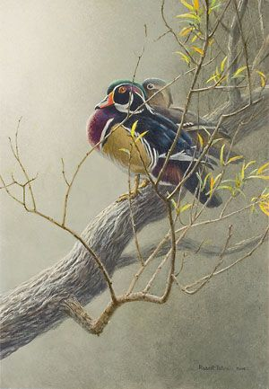 """""""Wood Duck Pair"""" by Robert Bateman is the frontpiece of the book."""
